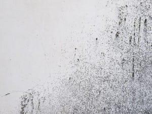 odstraňovanie plesní a rias z povrchu fasád