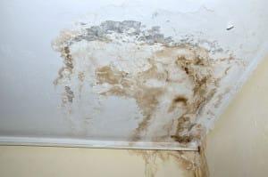 Ako zlikvidovať pleseň na stene