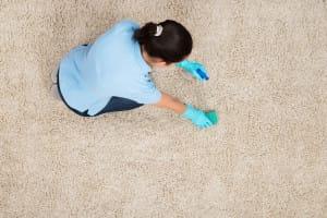 Čím vyčistit koberec a zbavit ho chlupů Praha 7