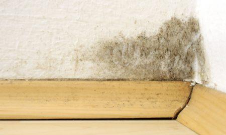 účinné odstranění plísně